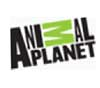 Watch our Fish Fun Co presentation on the Animal Planet Channel
