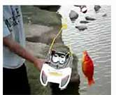 Fun times summer rc fishing catching the giant red fish with the Luckystrike